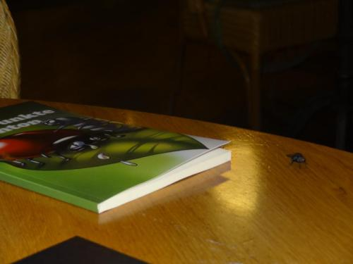 Kinderbuch Zehn Punkte für Anton mit Hubert (siehe rechts), der Stubenfliege :-)